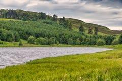 Lago & Forrest Pines Piperdam in Scozia Fotografia Stock Libera da Diritti