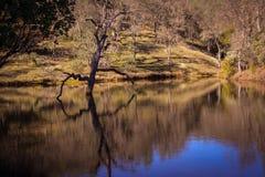 Lago frog al parco di stato di Henry W Coe vicino a Morgan Hill CA Fotografie Stock