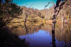 Lago frog al parco di stato di Henry W Coe vicino a Morgan Hill CA Fotografia Stock Libera da Diritti