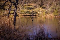 Lago frog al parco di stato di Henry W Coe vicino a Morgan Hill CA Fotografia Stock