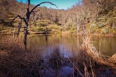 Lago frog al parco di stato di Henry W Coe vicino a Morgan Hill CA Immagine Stock Libera da Diritti