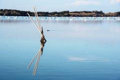 Lago Fusaro en Campi Flegrei, Nápoles Foto de archivo
