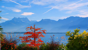 Lago Genebra. Switzerland. Imagem de Stock Royalty Free
