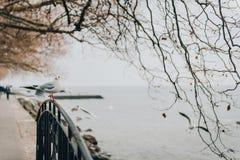 Lago geneva nell'orario invernale Fotografia Stock