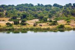 Lago George nell'Uganda fotografia stock libera da diritti