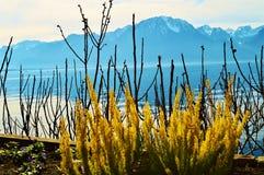Lago Ginevra, Montreaux, Svizzera Fotografia Stock Libera da Diritti