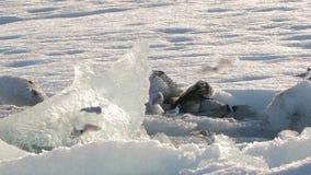 Lago glacial com pássaros filme