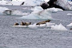 Lago glaciale in Islanda Immagine Stock