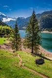 Lago Gosausee in primavera, alpi, Austria Fotografia Stock Libera da Diritti