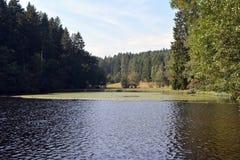 Lago grande da floresta em Alemanha Imagem de Stock
