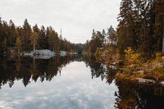 Lago grande en bosque conífero foto de archivo libre de regalías