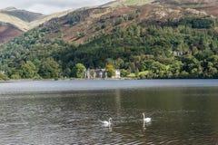 Lago Grasmere con los cisnes que nadan en la luz del sol Imagenes de archivo