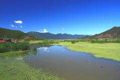 Lago grass en el lago Lugu, China Fotografía de archivo