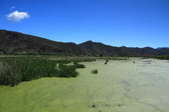 Lago grass en el lago Lugu, China Imagenes de archivo