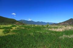 Lago grass en el lago Lugu, China Fotos de archivo libres de regalías