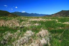 Lago grass en el lago Lugu, China Fotografía de archivo libre de regalías