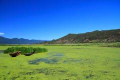 Lago grass nel lago Lugu, Cina Fotografie Stock