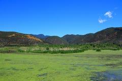Lago grass nel lago Lugu, Cina Fotografia Stock