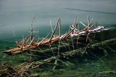 Lago hermoso con el árbol en jiuzhaigou Fotos de archivo