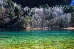 Lago hermoso con el árbol en jiuzhaigou Fotos de archivo libres de regalías