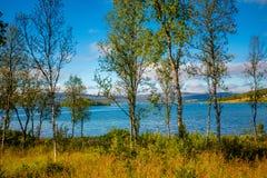 Lago hermoso de la montaña Árboles de abedul en la orilla del lago Fotografía de archivo libre de regalías