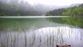 Lago hermoso de la montaña del paisaje con el bosque en el fondo Paisaje de la primavera de un lago de la montaña Bosque verde de metrajes