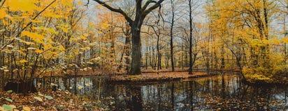 Lago hermoso del bosque con el roble enorme rodeado por las hojas de oro en el día del otoño fotos de archivo libres de regalías