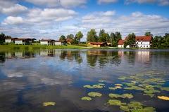 Lago hermoso del bosque con los lirios de agua en superficie Imágenes de archivo libres de regalías