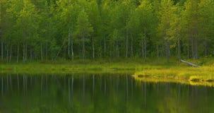 Lago hermoso en el bosque finlandés verde y enorme por la mañana metrajes