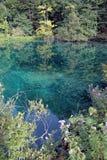 Lago hermoso rodeado por los árboles en un bosque Imágenes de archivo libres de regalías