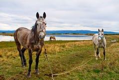 Lago horse Fotografia Stock Libera da Diritti