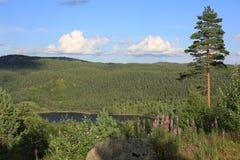 Lago idílico en Noruega Imagenes de archivo