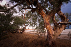 Lago Indoon - Australia occidental imagen de archivo