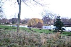 Lago inglese del parco nazionale con l'albero di salice Immagini Stock