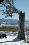 Lago invernale Yellowstone Fotografia Stock