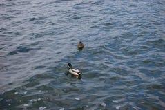 Lago Iseo Fotografia Stock Libera da Diritti