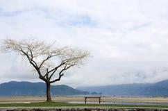 Lago isolado Harrison do revestimento do banco e do salgueiro Imagens de Stock Royalty Free