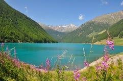 Lago Italia mountain con las flores rosadas Imagenes de archivo