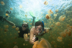 Lago jellyfish Fotografie Stock