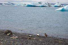 Lago Jokulsarlon in Islanda immagini stock