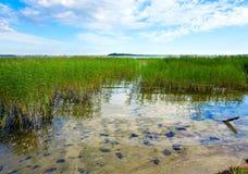 Lago juncoso summer fotos de archivo