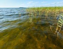 Lago juncoso summer fotografía de archivo