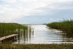 Lago juncoso summer imagenes de archivo