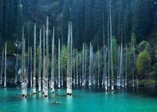 Lago Kaindy con los abedules en la montaña de Tien Shan, Akmaty, Kazajistán Fotos de archivo