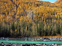 Lago Kanas della baia del dinosauro in autunno Fotografia Stock