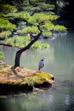 Lago Kinkakuji Foto de archivo