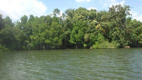 Lago Koggala no Sênior Llanka imagens de stock
