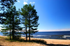 Lago Ladoga. Una spiaggia. fotografia stock