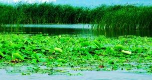 Lago, lagos, pantanal, lago do leste Huaiyang Foto de Stock Royalty Free