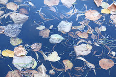 Lago landscape imagem de stock royalty free